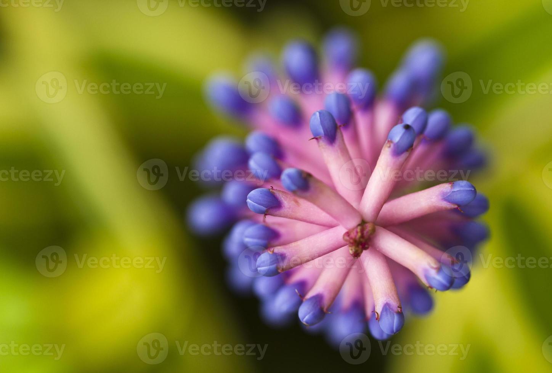 correspondre comme une fleur photo