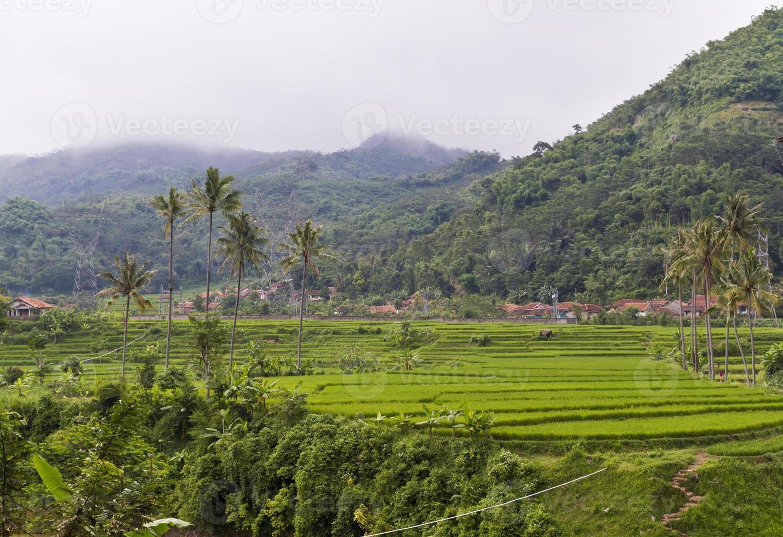 rizière près de la montagne photo