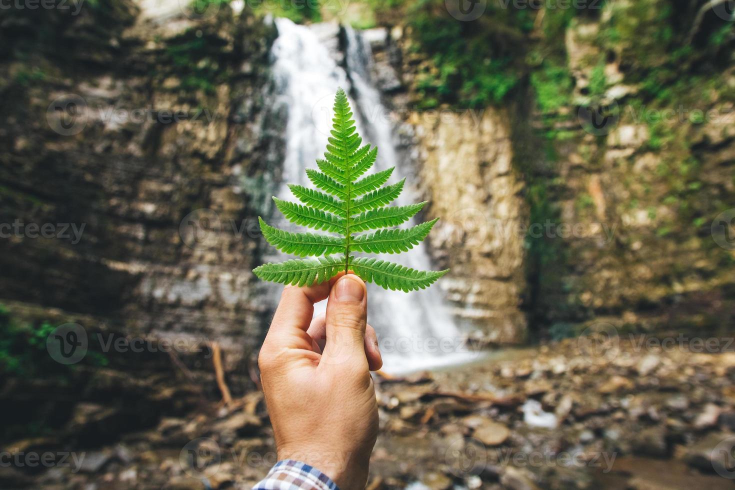 feuille verte de fougères à la main sur fond de rochers et cascade photo