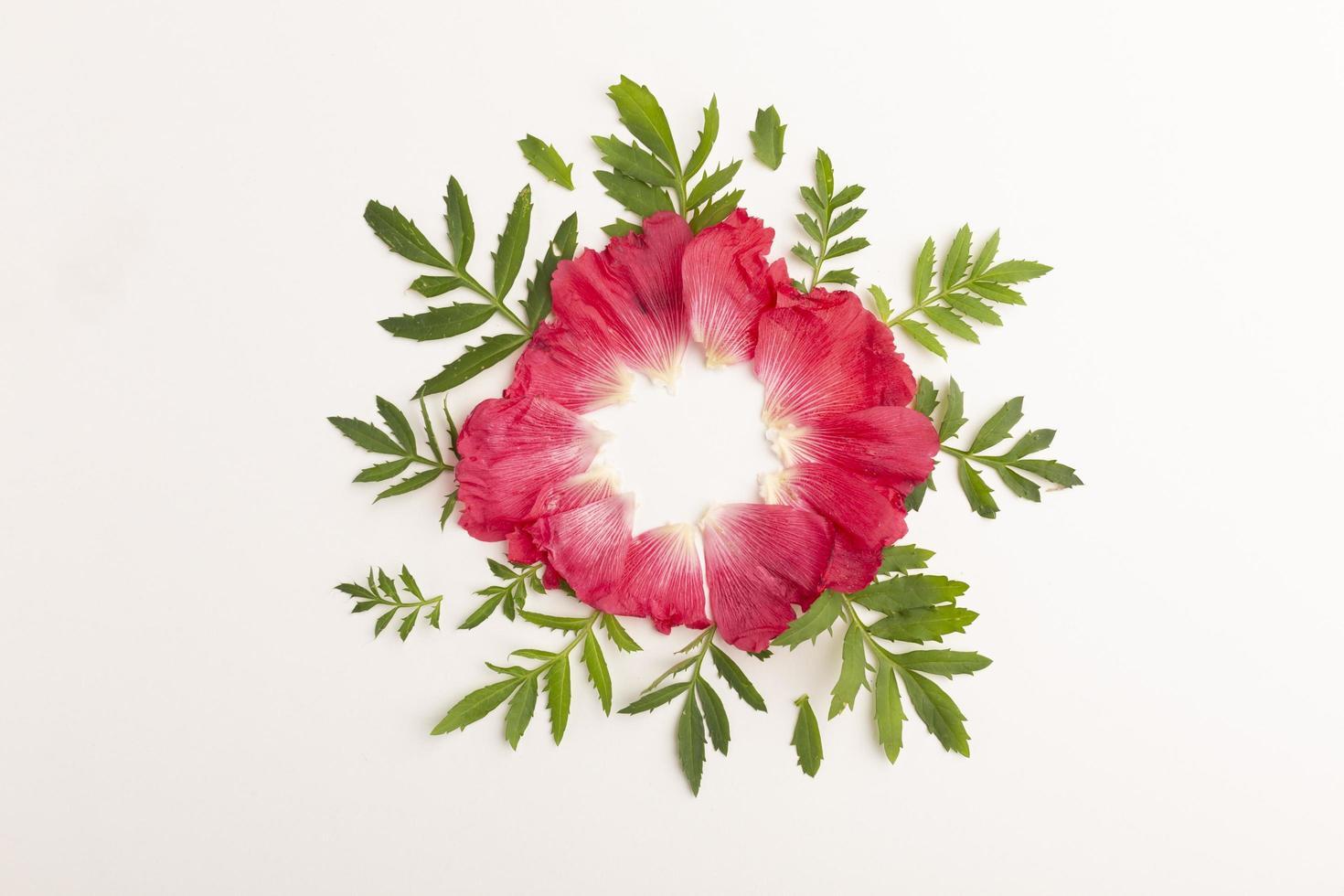 les fleurs de composition vue de dessus photo
