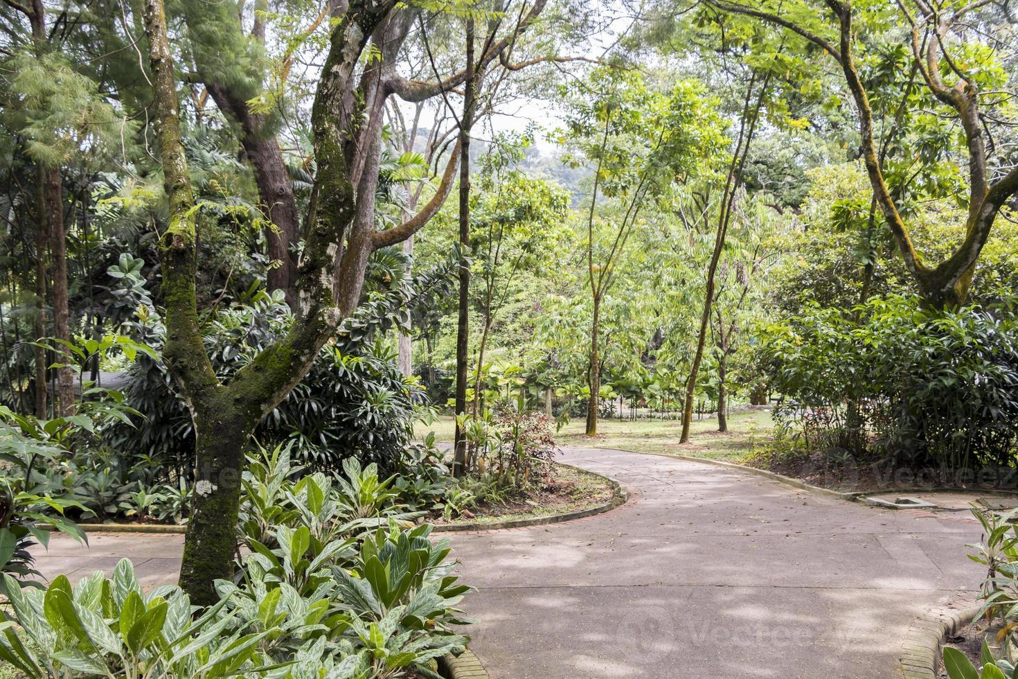 jardins botaniques parfaits et propres du parc perdana à kuala lumpur. photo