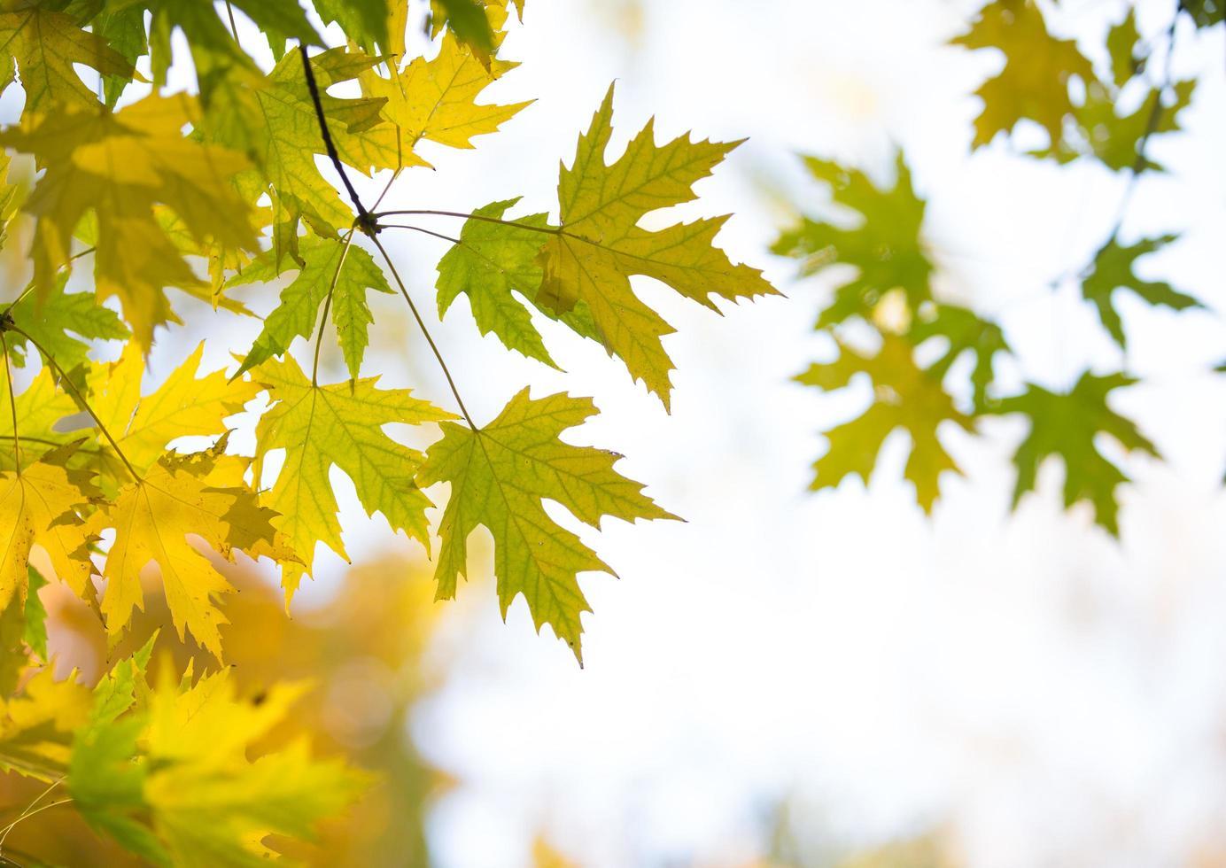 forêt d'automne aux beaux jours photo
