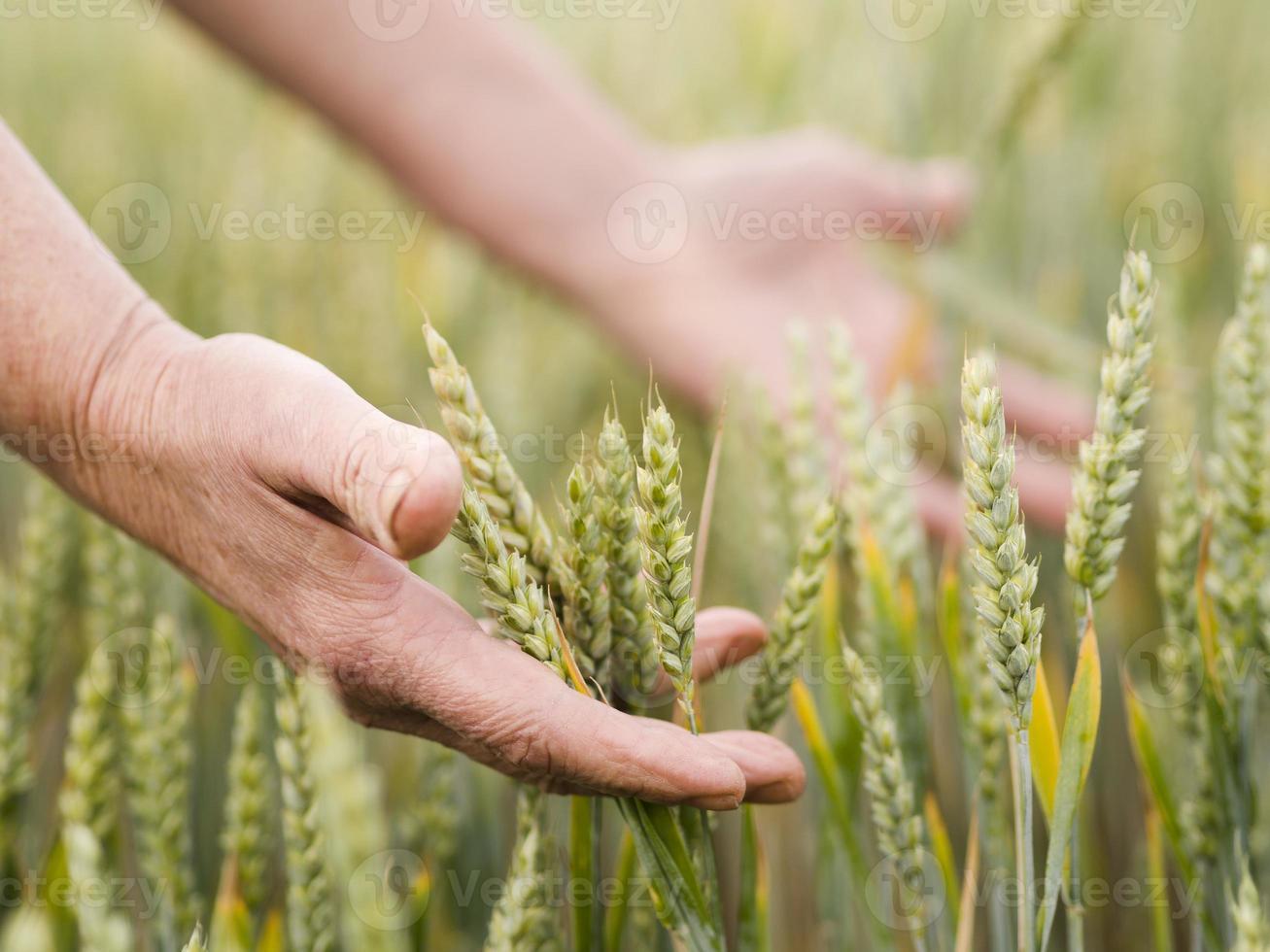 femme tenant du blé photo