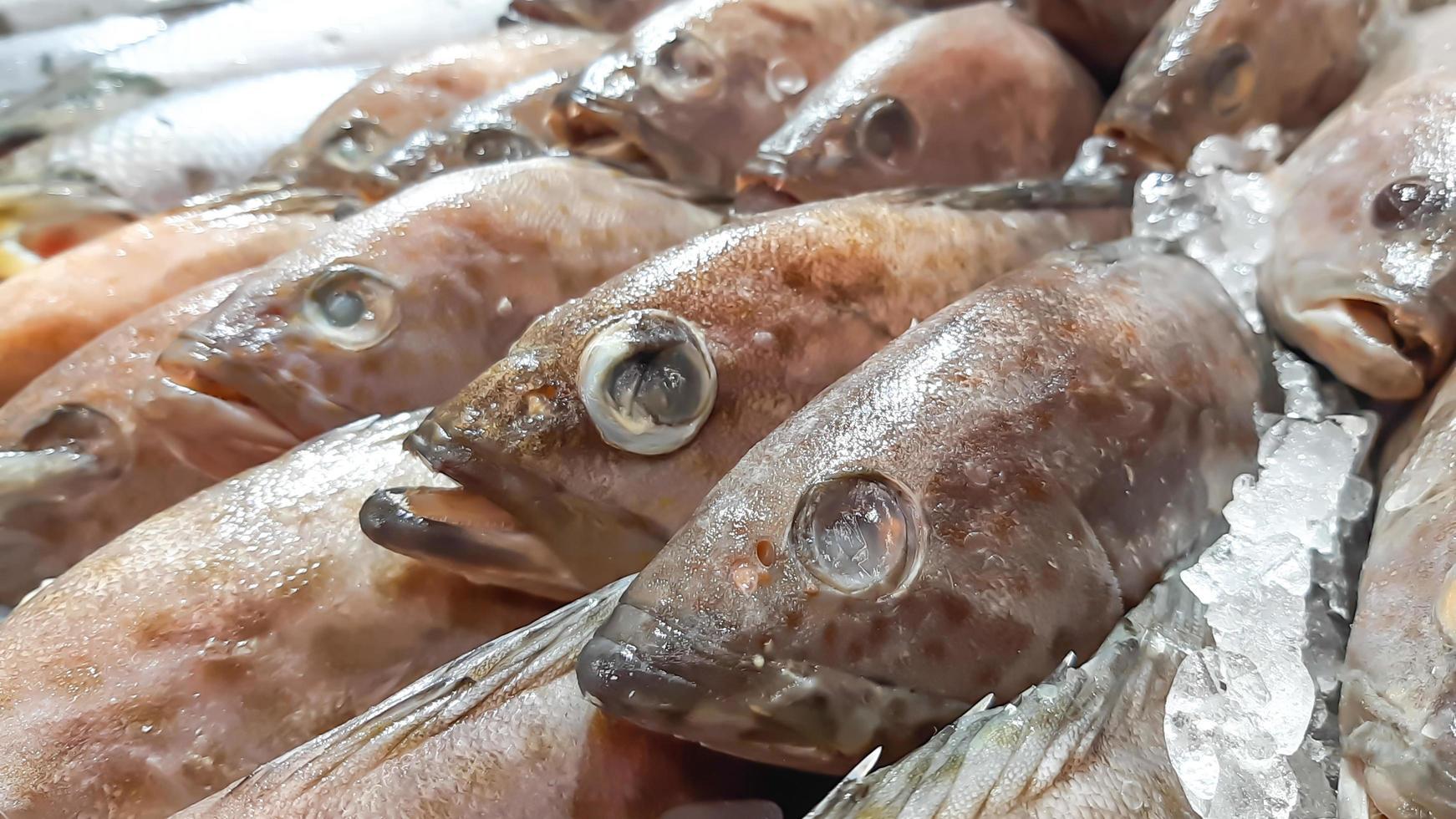 gros plan du poisson frais cru sur glace dans l'échoppe de marché de fruits de mer photo