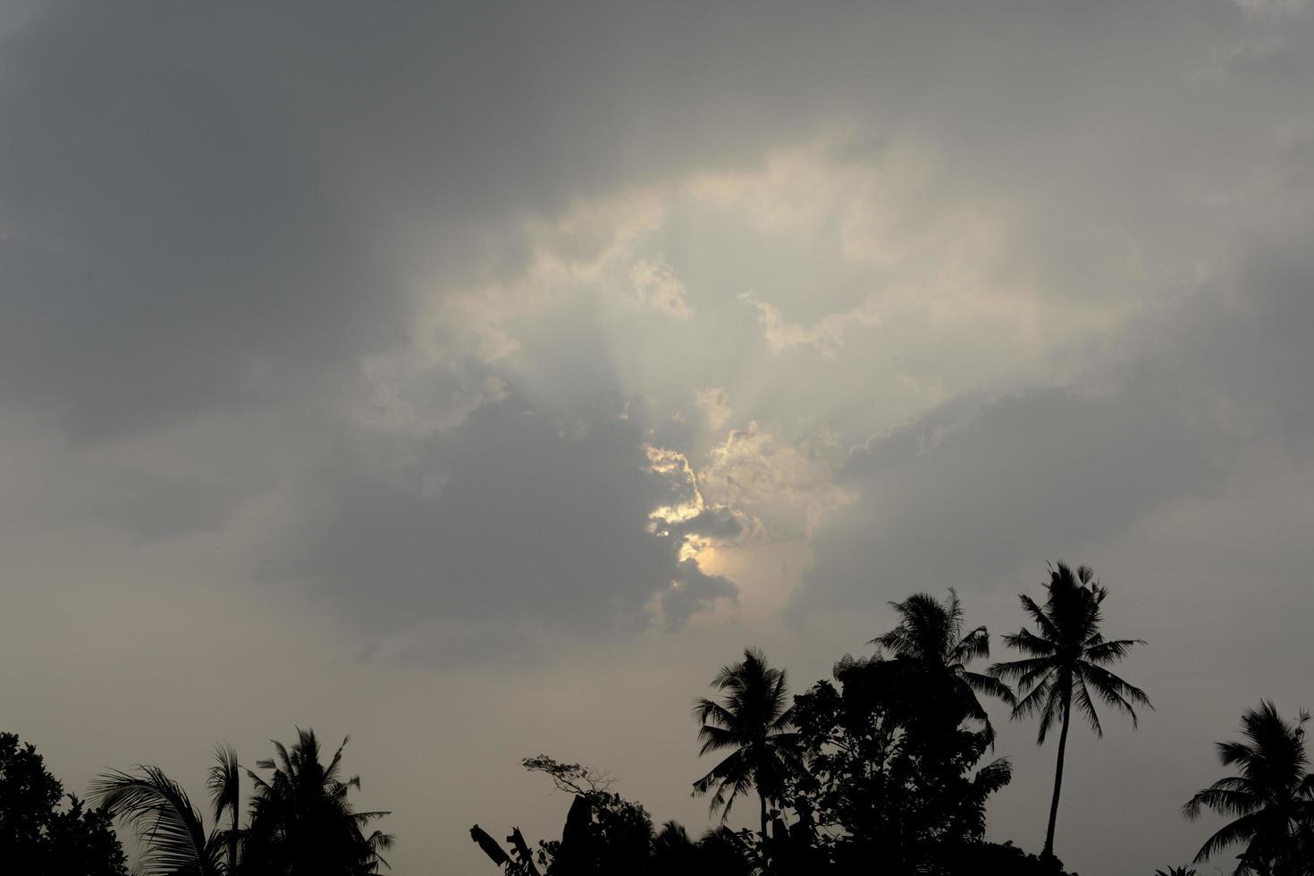silhouette d'arbres et vue sur le ciel du soir photo