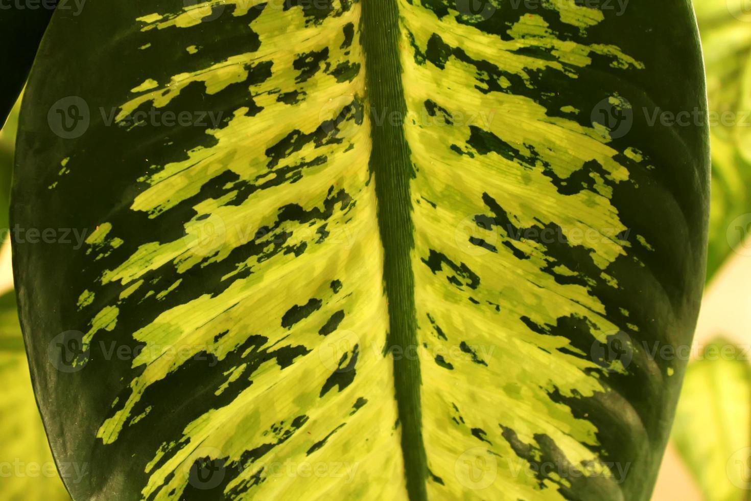 fond naturel feuillu herbeux ou toile de fond composée d'une variété de plantes. feuilles tropicales photo