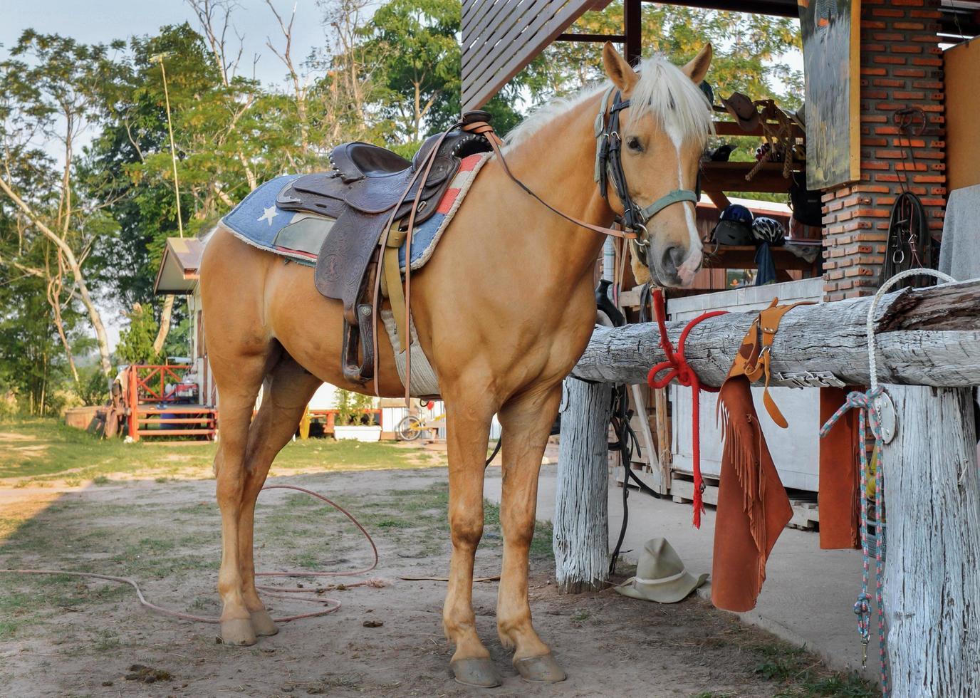 cheval brun avec des rênes debout dans la ferme photo