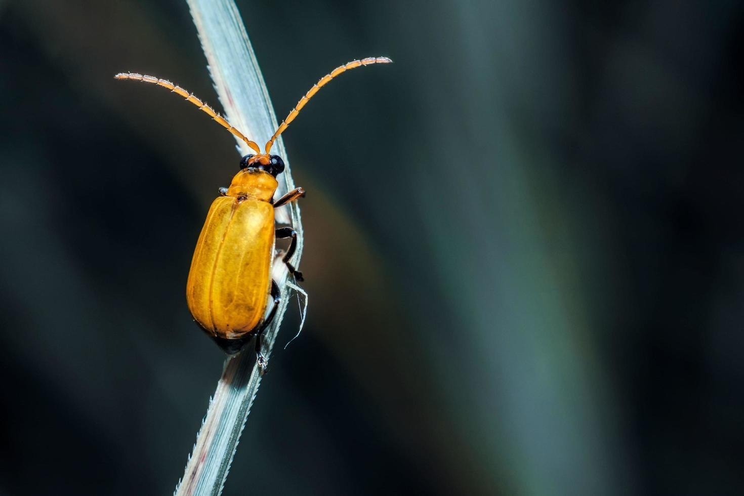 bug jaune sur une branche photo