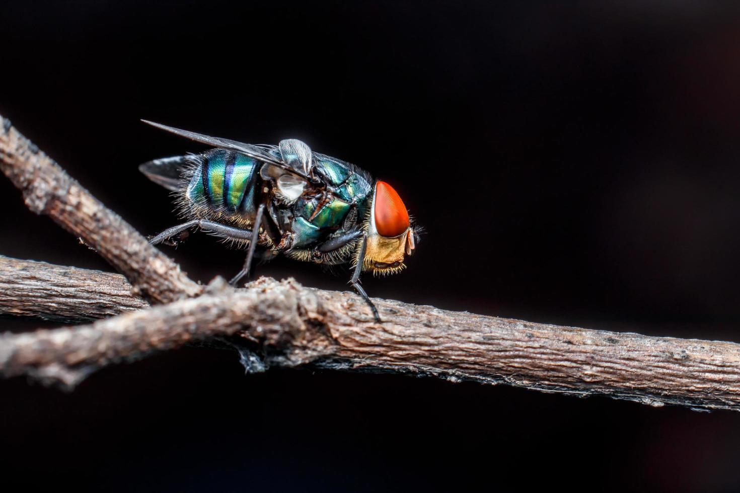 gros plan de mouches sur une feuille photo
