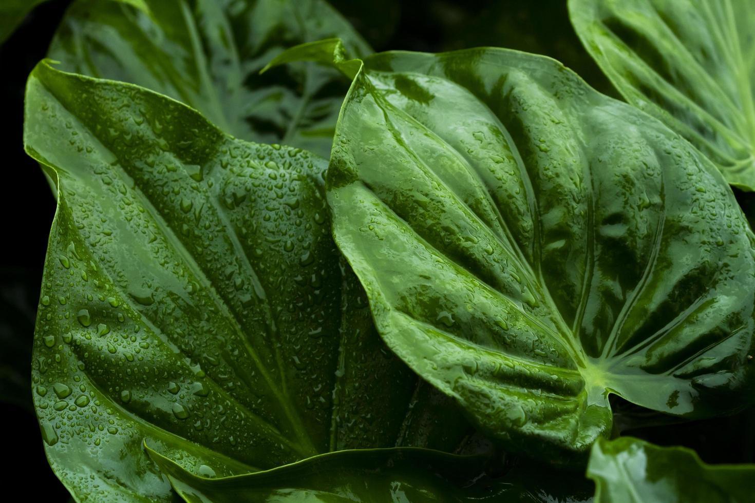 feuilles vertes se bouchent photo