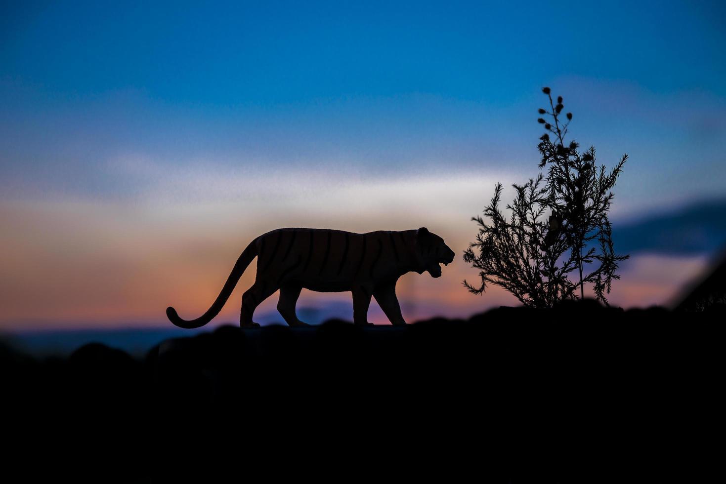 silhouette d'animal tigre au fond du coucher du soleil photo