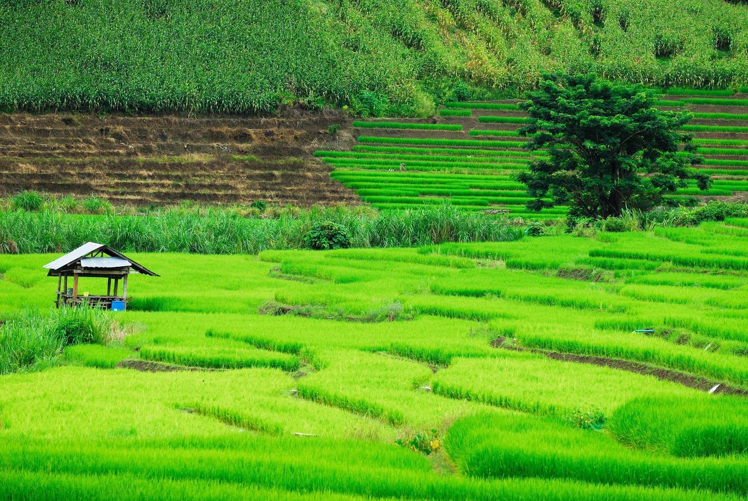 Rizières en terrasse dans le district de mae chaem chiang mai, thaïlande photo