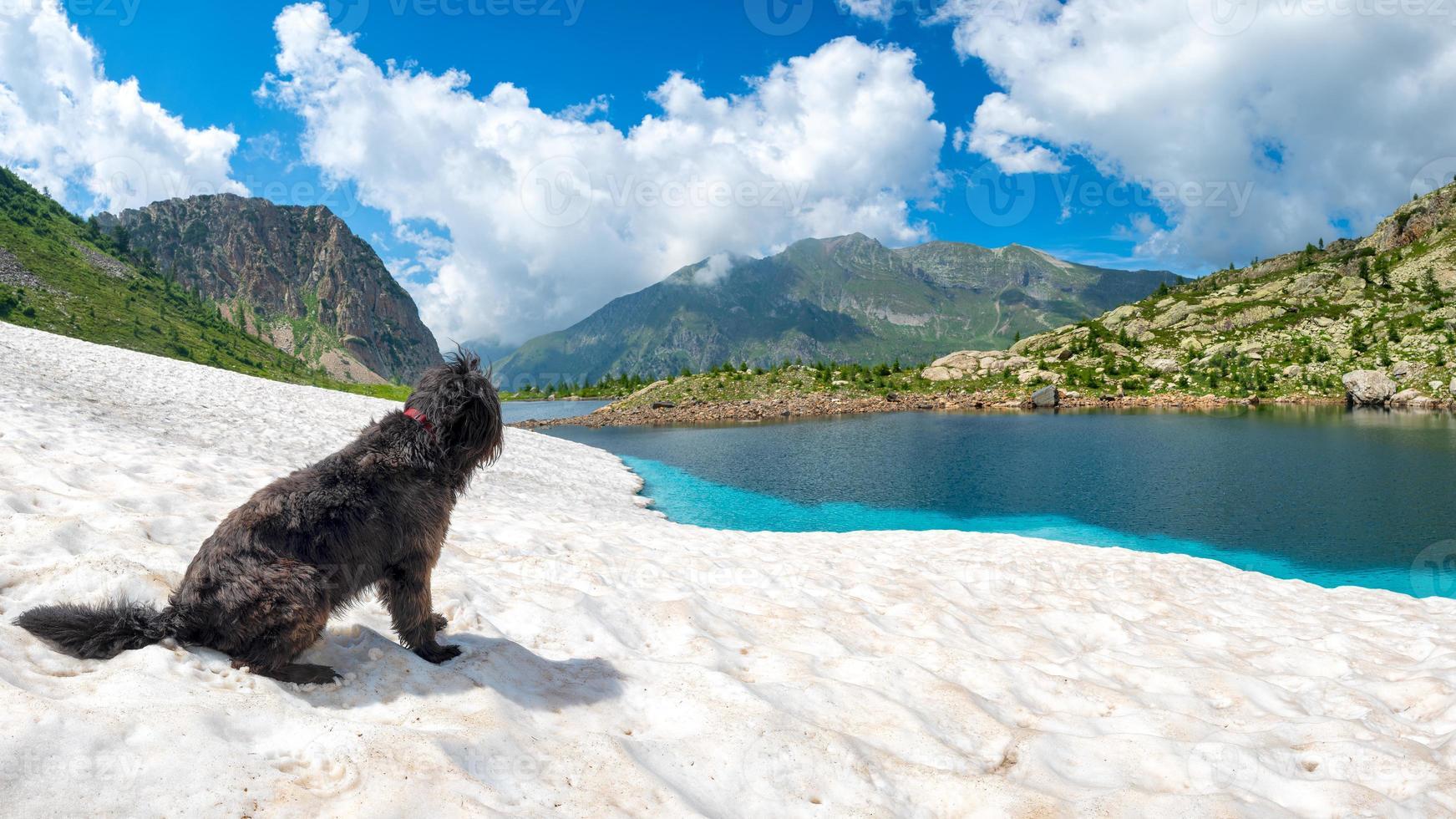 chien de berger sur la neige près du lac de montagne photo