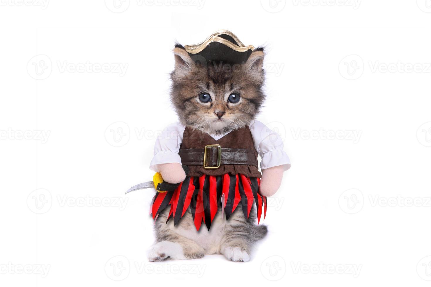 chaton sérieux en costume de vêtements inspirés des pirates photo