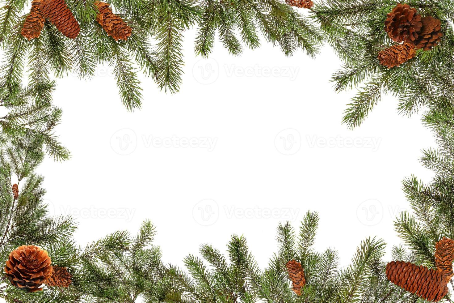 branches d'arbres verts et pommes de pin sur fond blanc photo