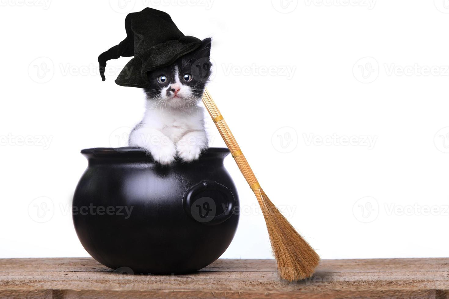 adorable chaton habillé en sorcière d'halloween avec chapeau et balai en chaudron photo