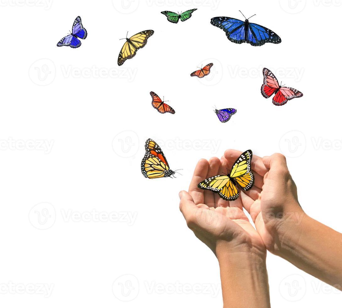 mains libérant des papillons dans un espace blanc vierge photo