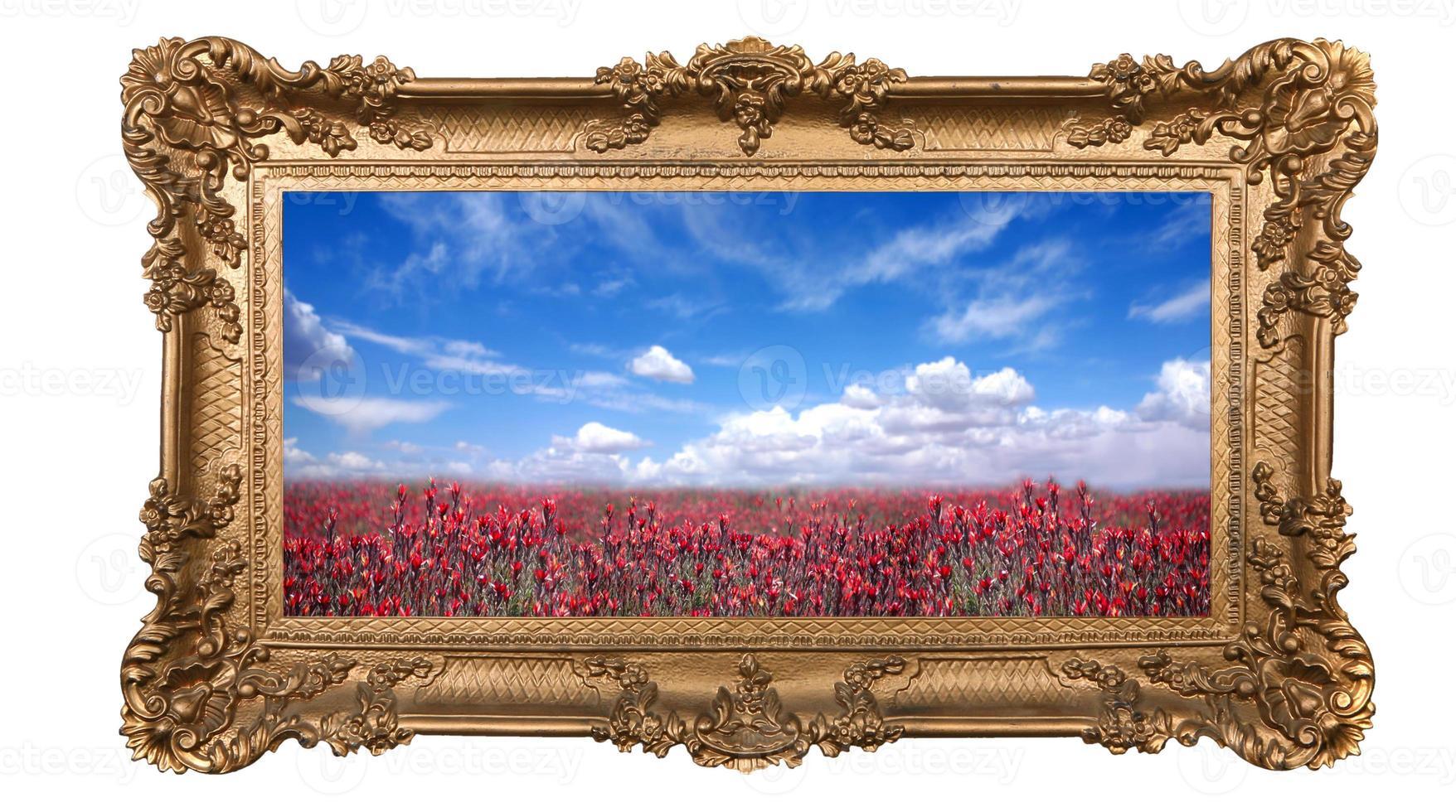 champ encadré de jolies fleurs rouges et beau ciel photo