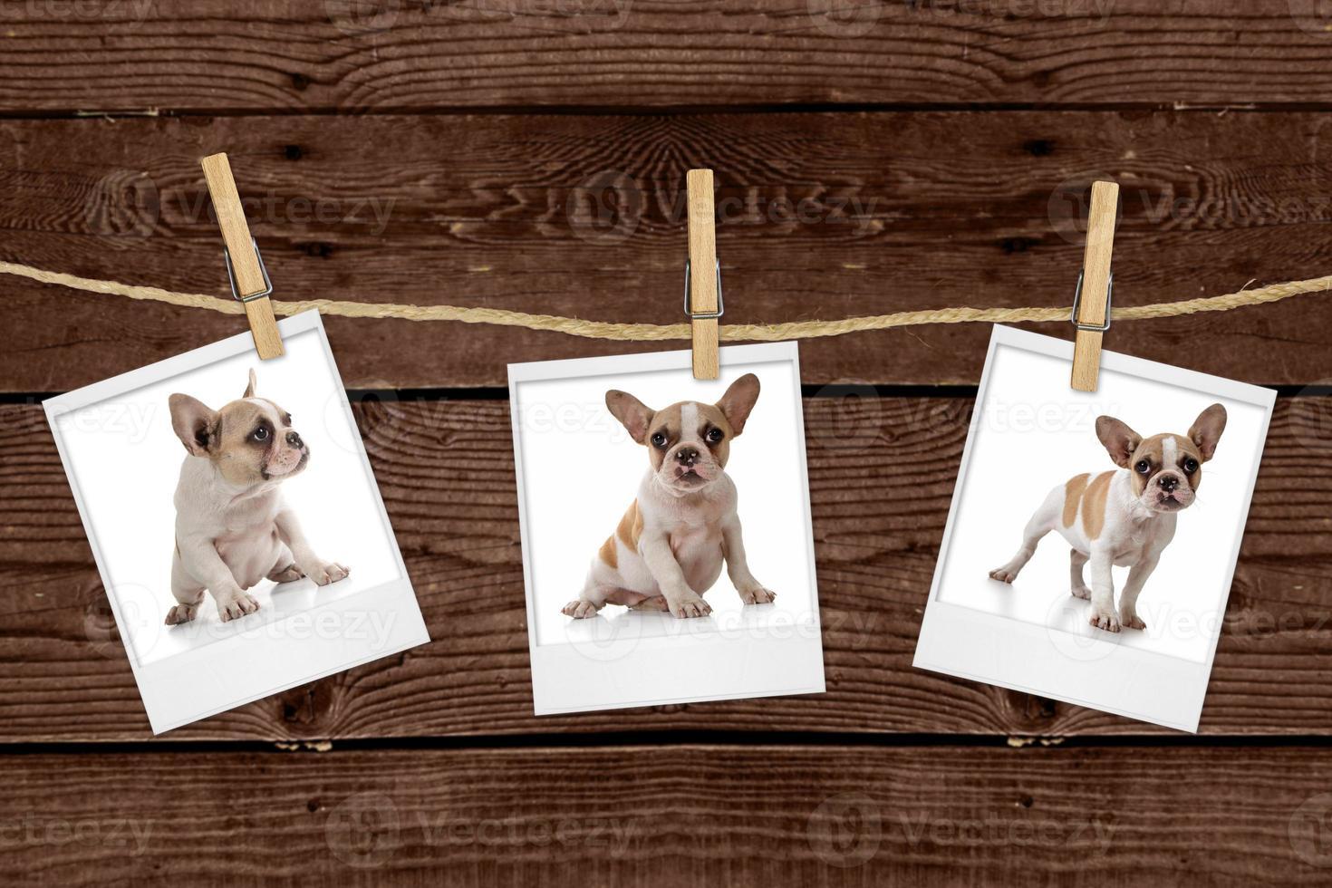photos accrochées à une corde d'un adorable chiot