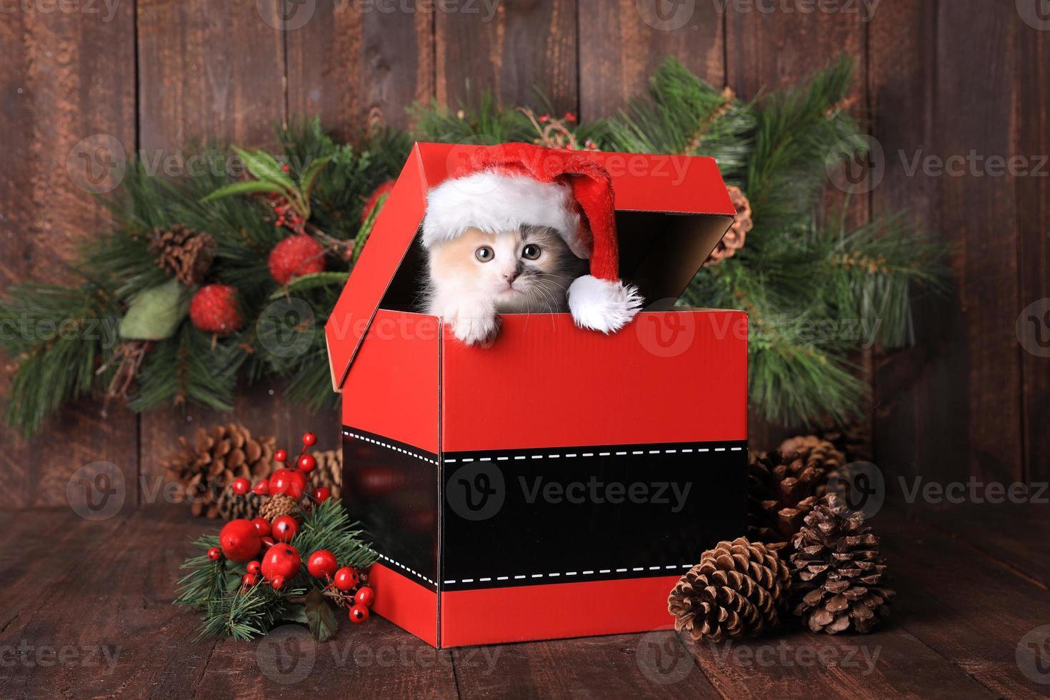 chaton de noël sur une boîte photo