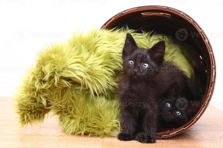 chatons curieux à l'intérieur d'un panier sur le blanc photo