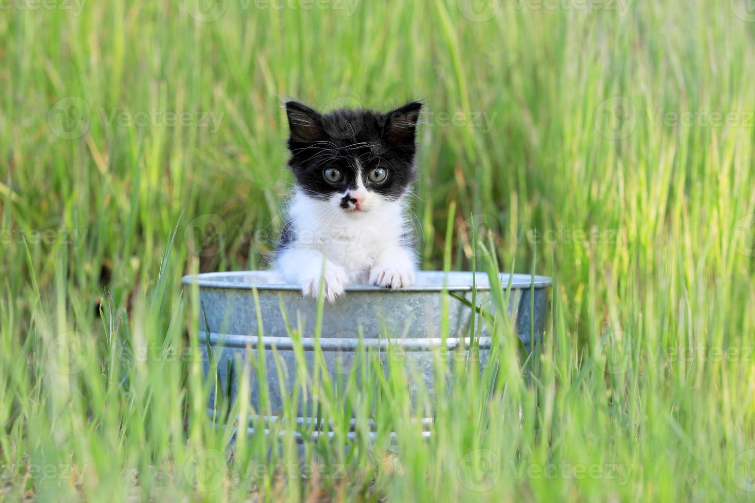 chaton à l'extérieur dans les hautes herbes vertes par une journée ensoleillée photo