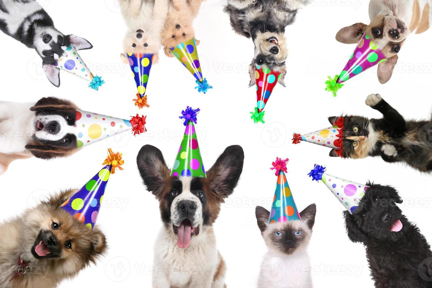 animaux de compagnie isolés portant des chapeaux d'anniversaire pour une fête photo