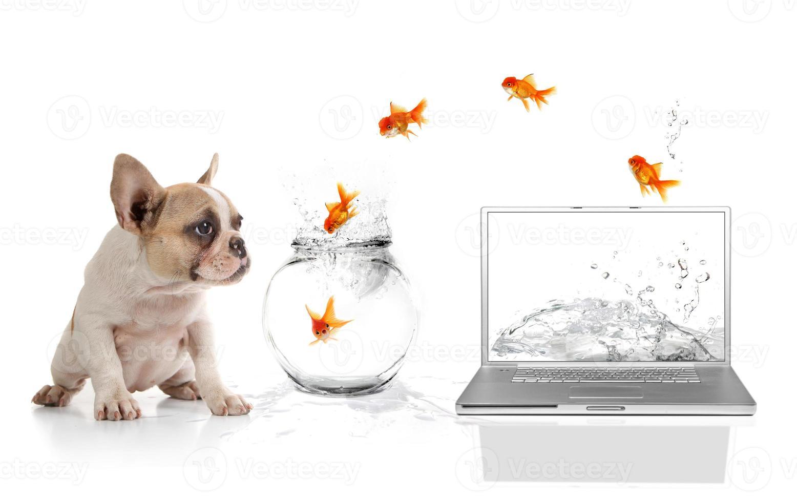 chiot mignon regardant un poisson rouge s'échapper du monde virtuel photo