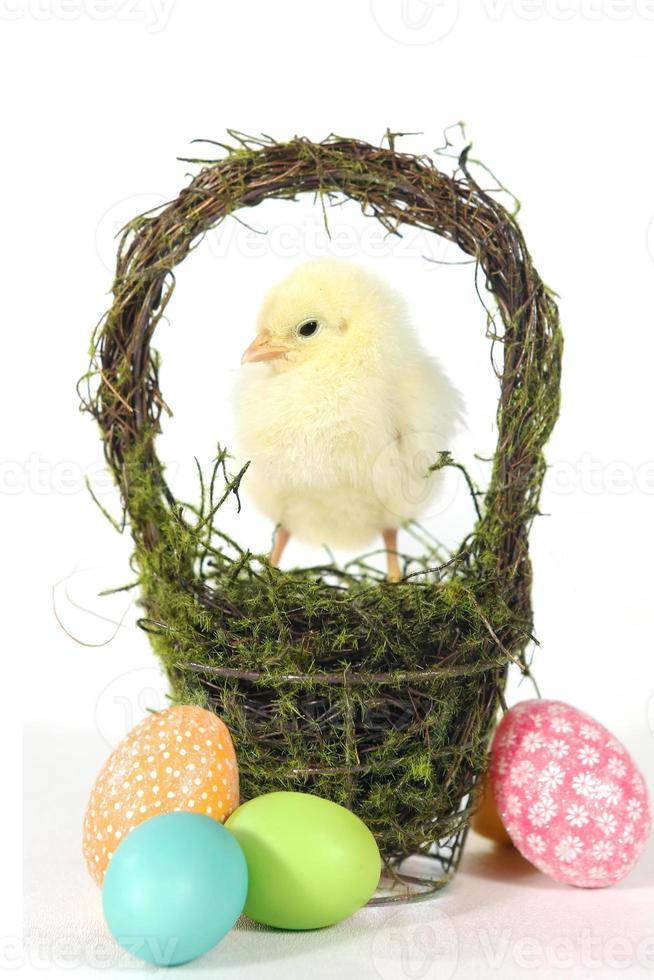 image avec des poussins et des œufs photo