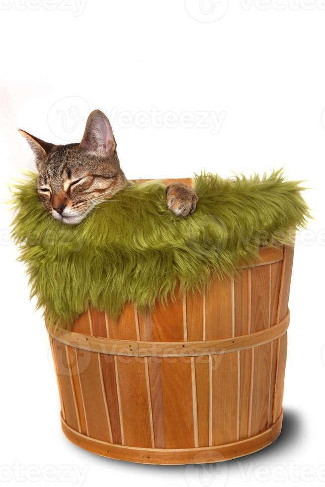 petit chaton dans un panier photo