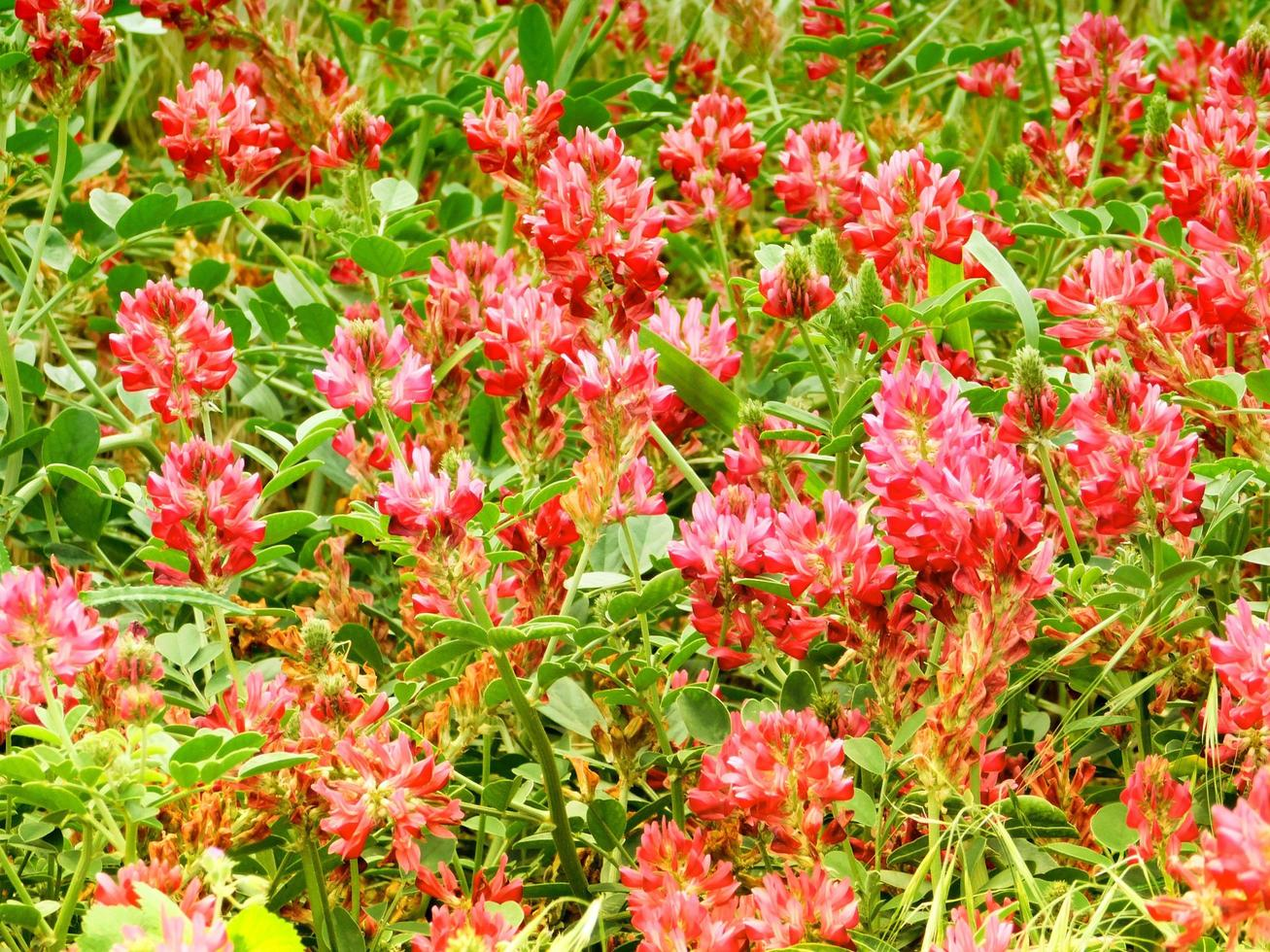 fleurs en plein air dans le jardin photo