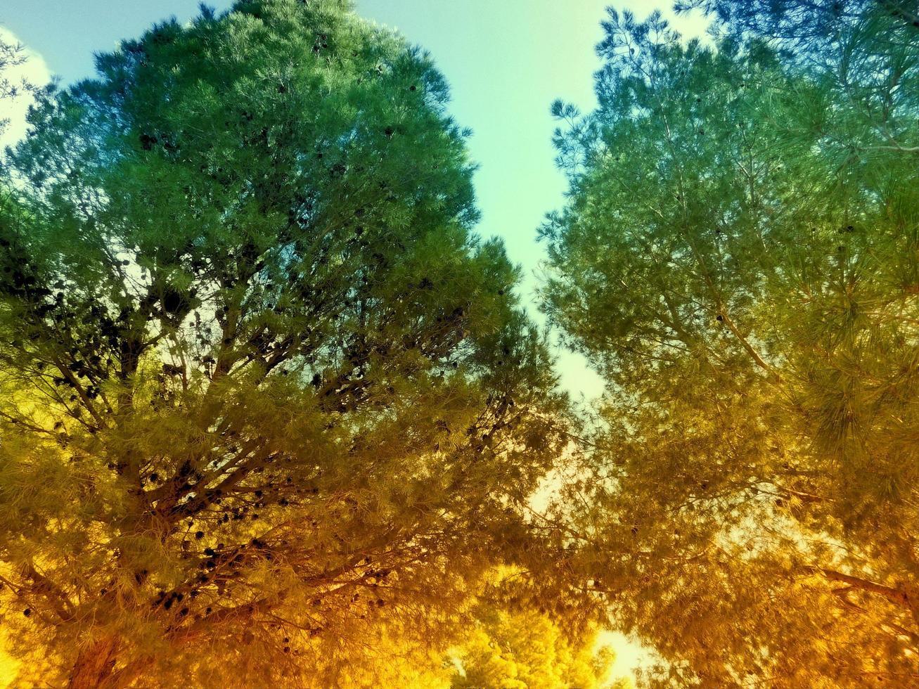 arbres en bois à l'extérieur photo