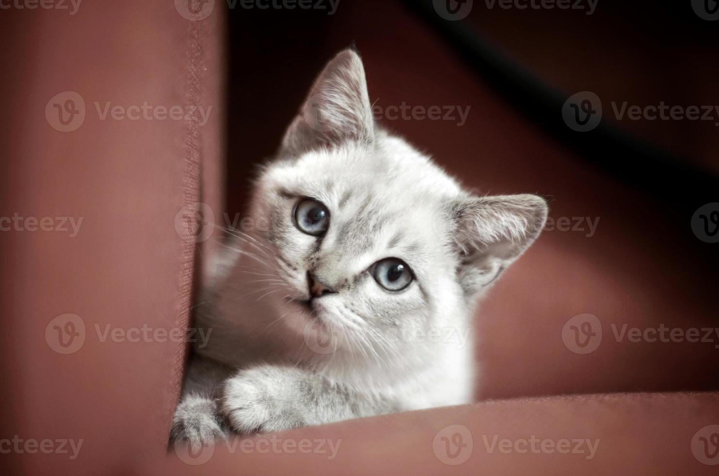 chaton innocent photo