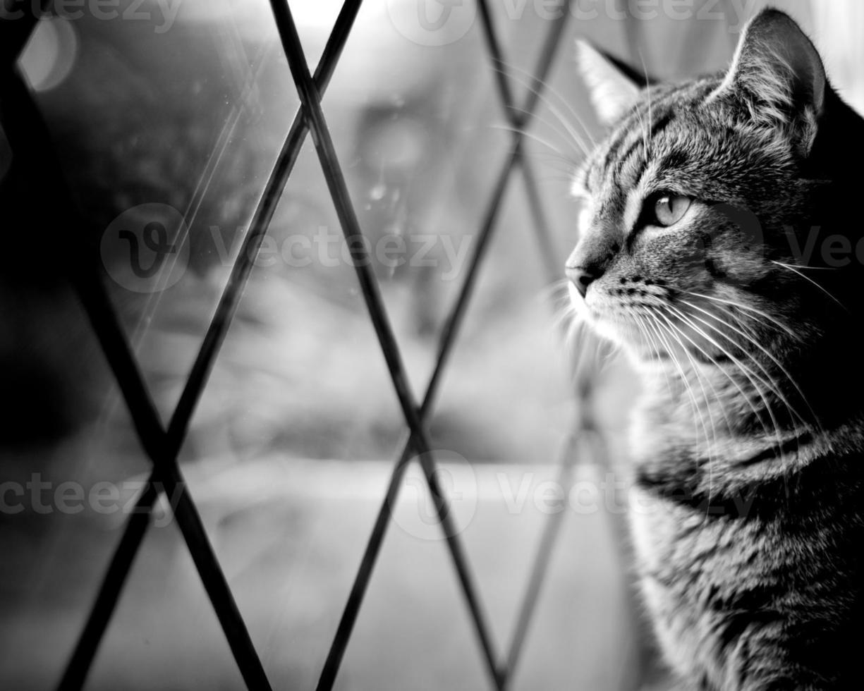 chat tigré par fenêtre photo