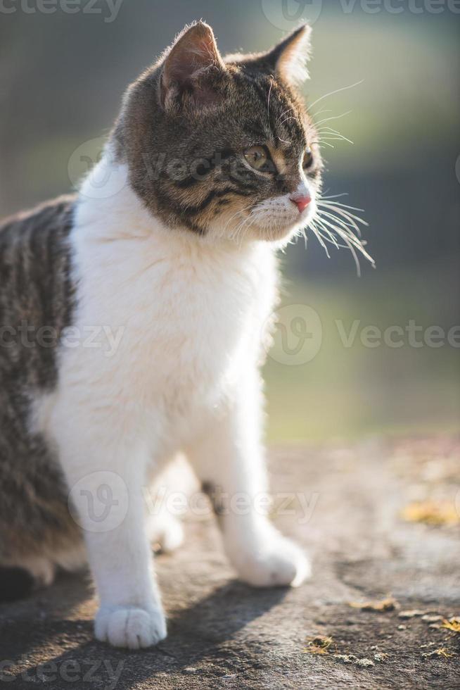 chat mignon posant en plein air photo