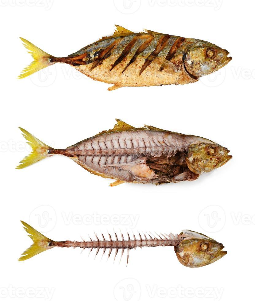 poisson photo