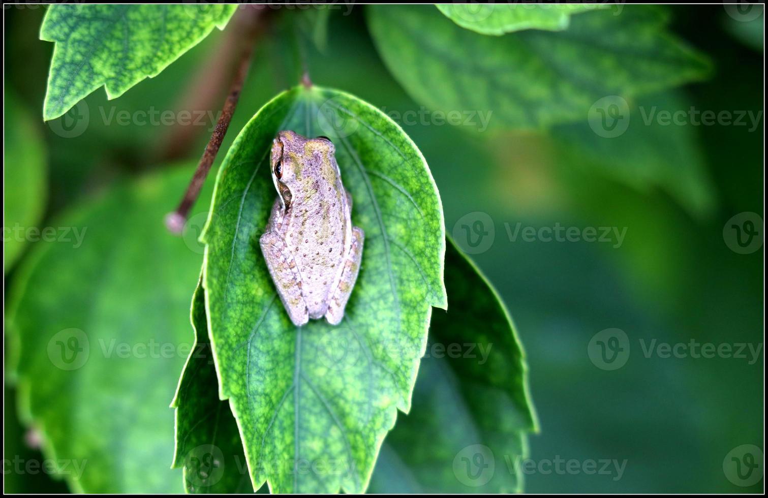insectes et reptiles et macro photo