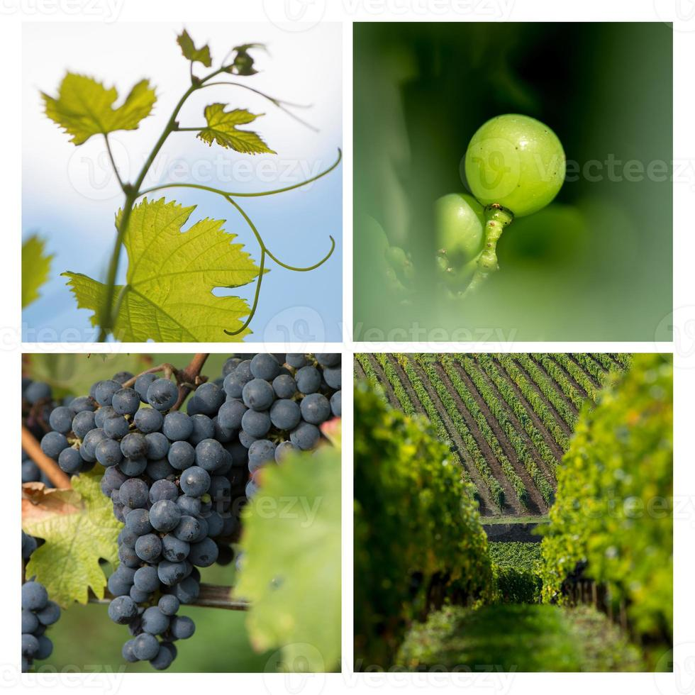 Vignoble collage-raisin-vigne photo