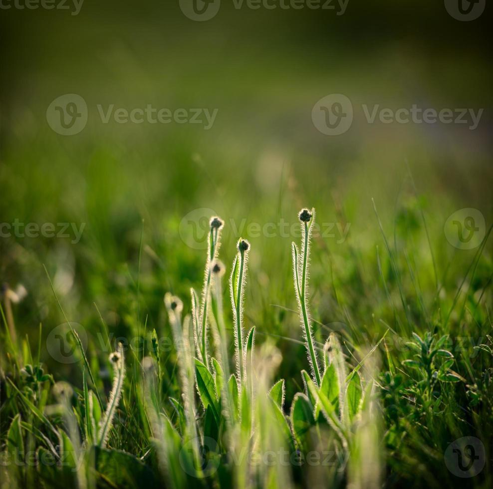 jour de printemps photo