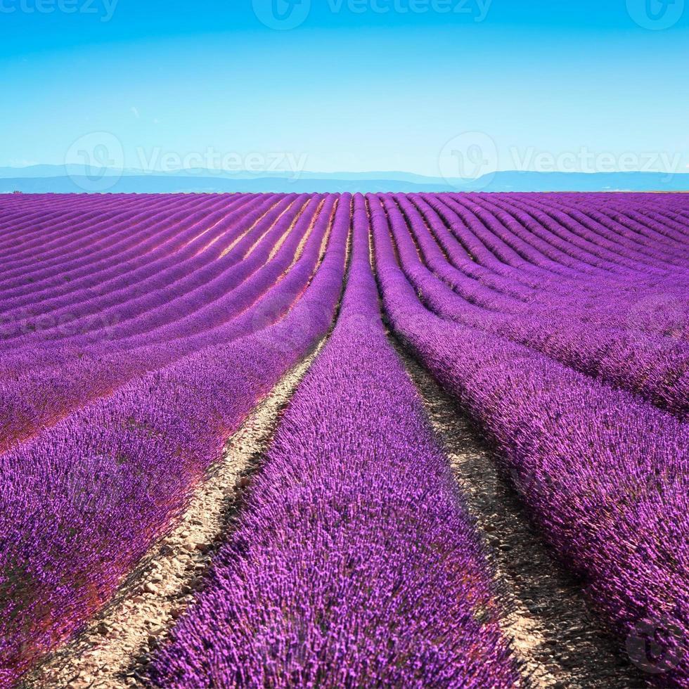 champs de fleurs de fleurs de lavande interminables rangées. valensole provence photo