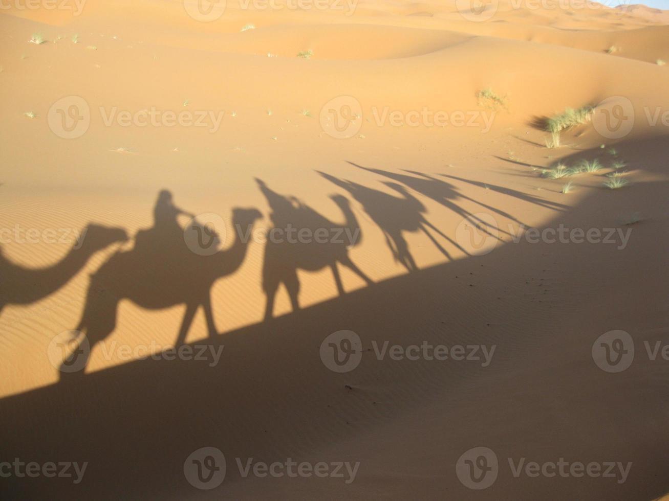 silhouettes de chameaux dans le désert du sahara photo