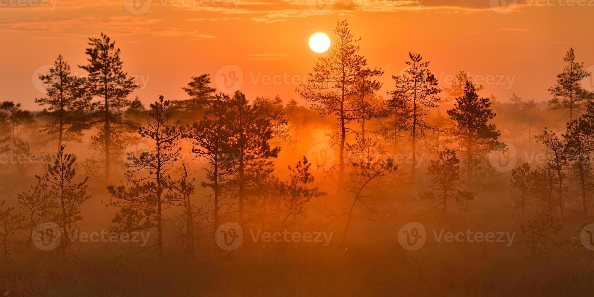 lever du soleil dans la tourbière photo