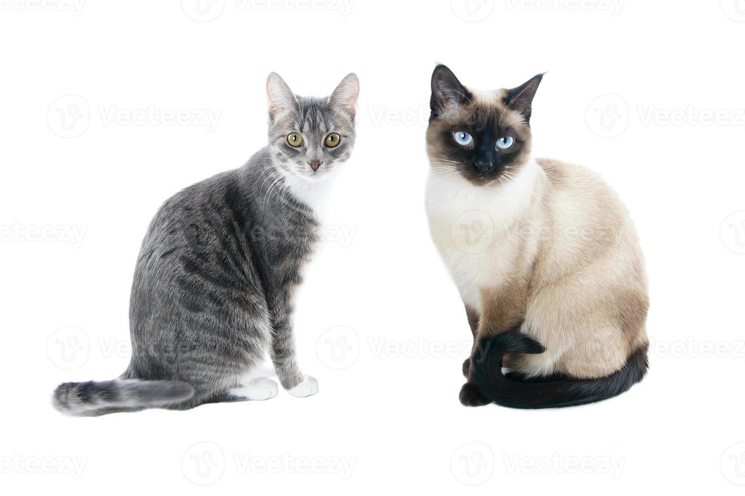 deux chats photo