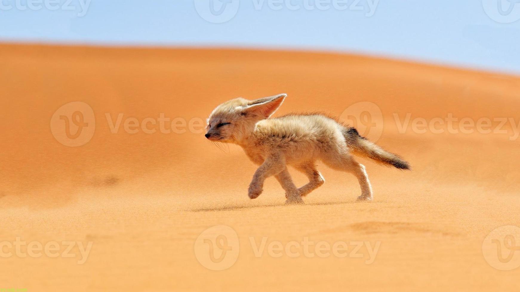 animal & nature photo
