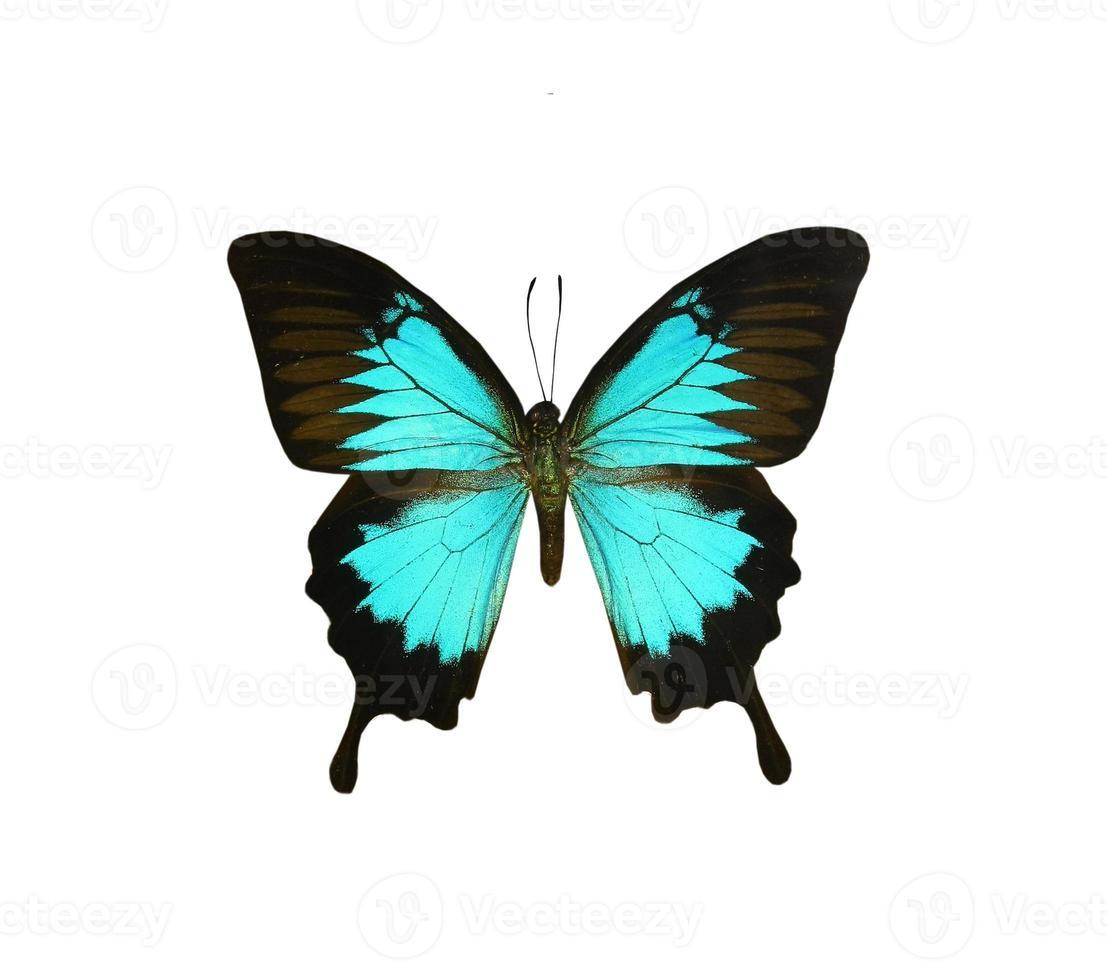 papillon coloré isolé sur blanc photo