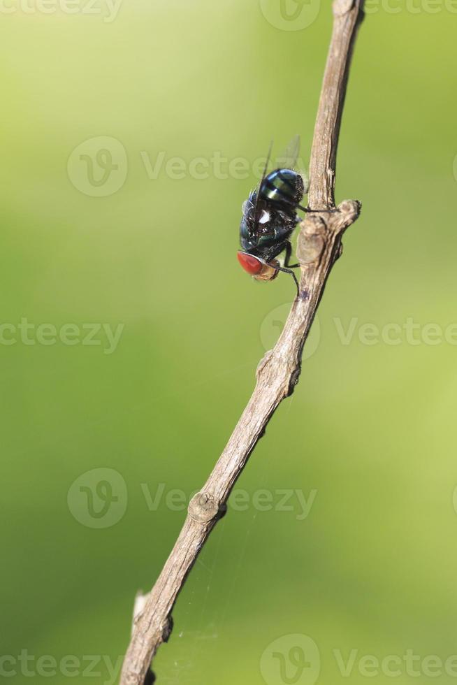voler sur une branche photo