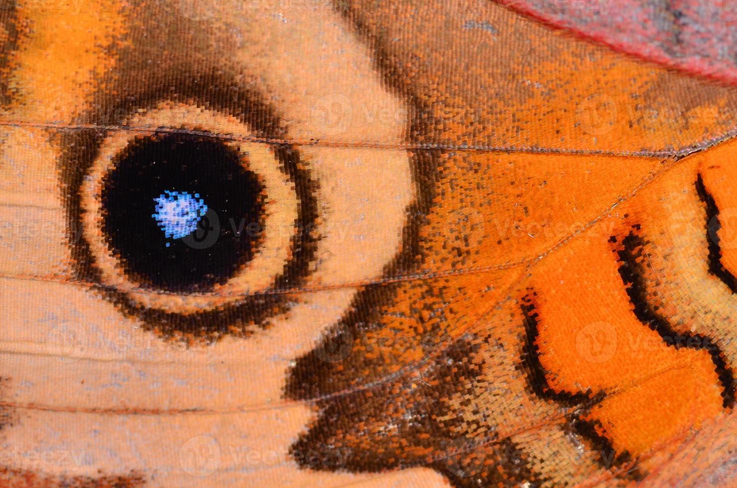 macro, de, paon, papillon, aile, oeil, tache, et, courbé, côtes photo