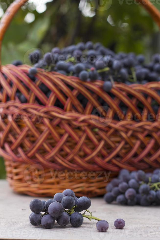 paniers avec raisins nature photo