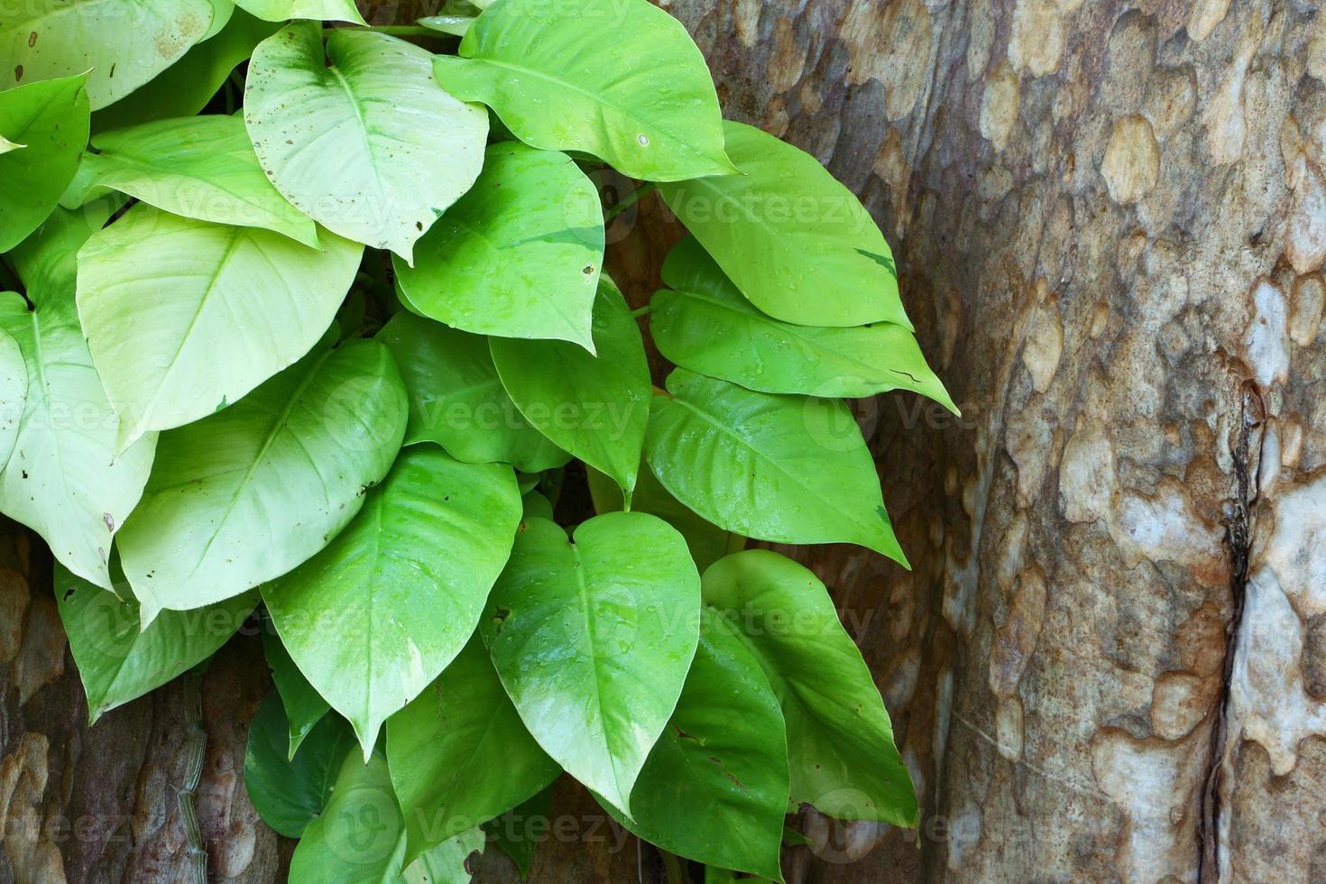 accrobranche dans un arbre photo