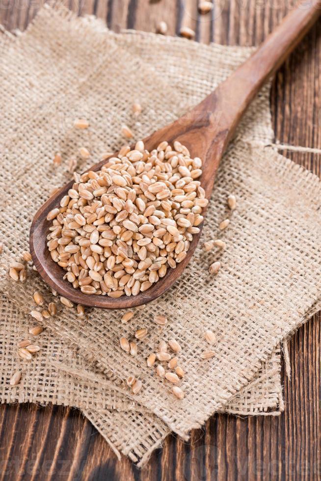 grains de blé photo